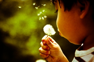Dandelion_by_Alonso_Mayo_via Flickr CC licensing